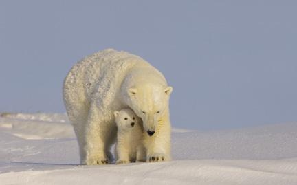 large-Polar-Bear-photo.jpg