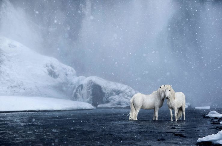 animal-photography-icelandic-horses-in-the-realm-of-legends-drew-doggett-14-5b5afbe934ad7__880