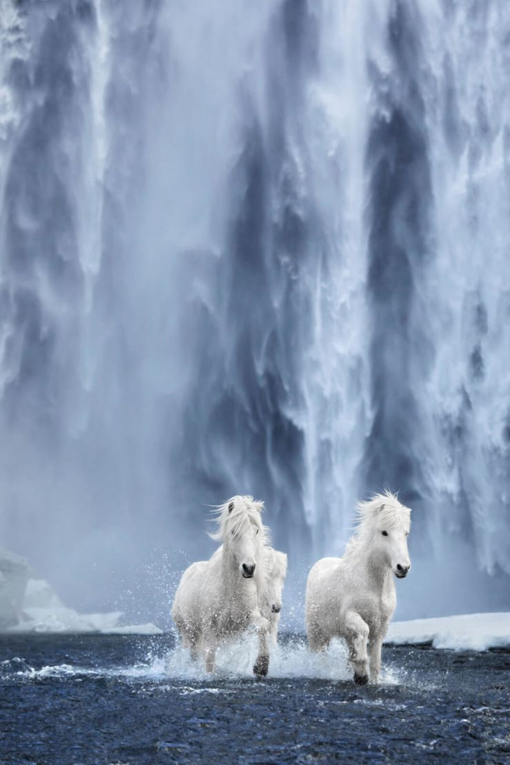 animal-photography-icelandic-horses-in-the-realm-of-legends-drew-doggett-32-5b5afc0cc0d0f__880
