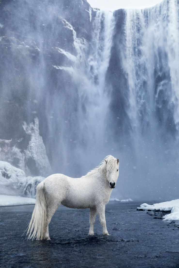 animal-photography-icelandic-horses-in-the-realm-of-legends-drew-doggett-34-5b5afc12d0c8f__880