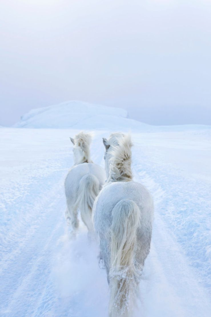 animal-photography-icelandic-horses-in-the-realm-of-legends-drew-doggett-36-5b5afc178ef4d__880